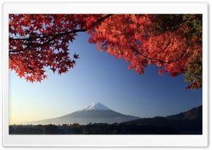 Blooming Sakura 3d Screensaver Live 1280720 Scenery Wallpaper Anime Scenery Wallpaper Anime Cherry Blossom