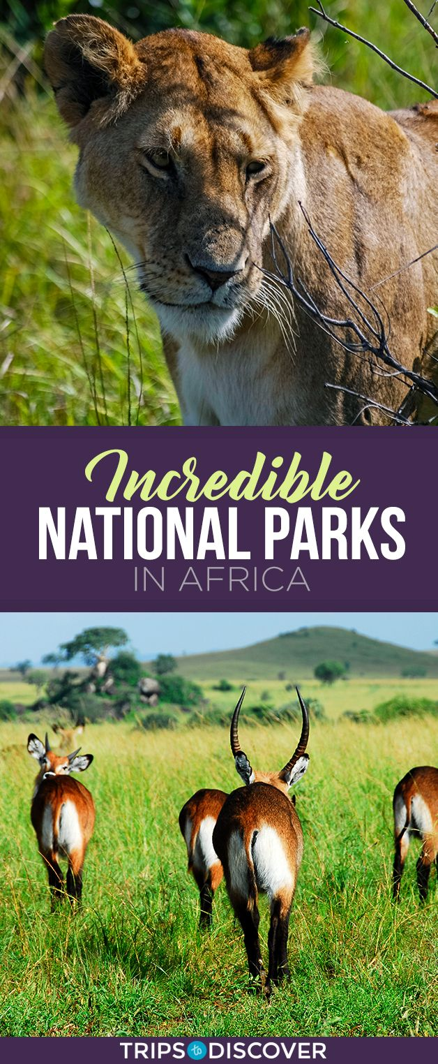 10 National Parks in Africa for Your Travel Bucket List in