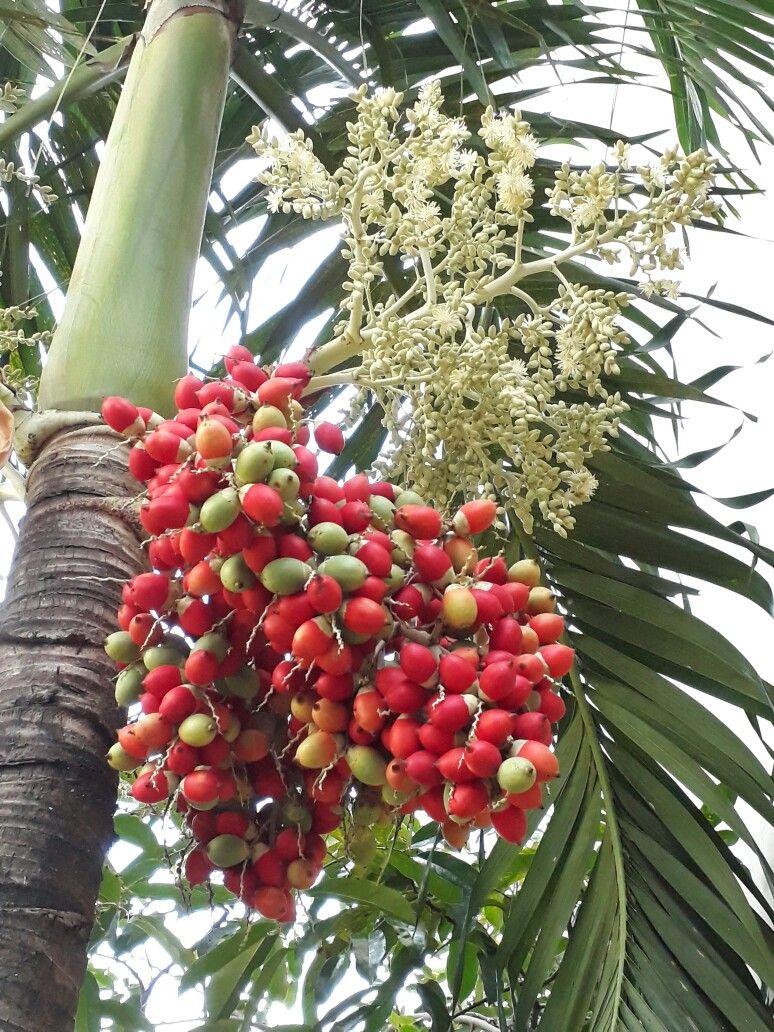 Pin oleh Caecilia Hari Moerti di Tropical Plant