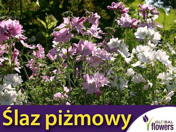 Slaz Pizmowy Mieszanka Malva Moschata 0 2g Nasiona Plumeria Flowers Plants