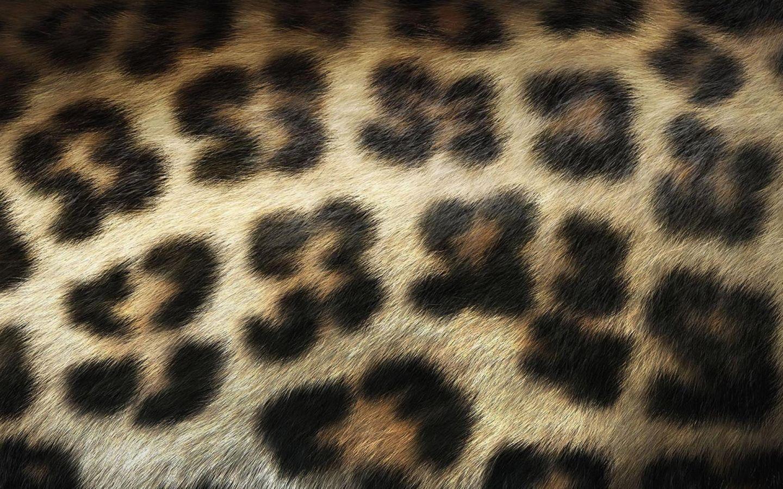 Piel De Animal Salvaje Wallpaper Wallpapers Organizados Por Temas