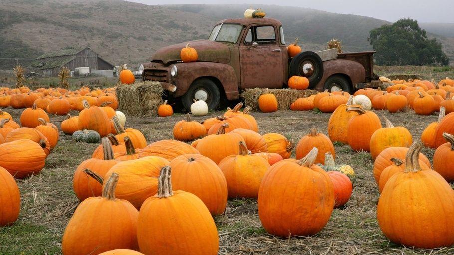 Pumpkin Truck Farm Pumpkin Wallpaper Pumpkin Patch Pumpkin Farm