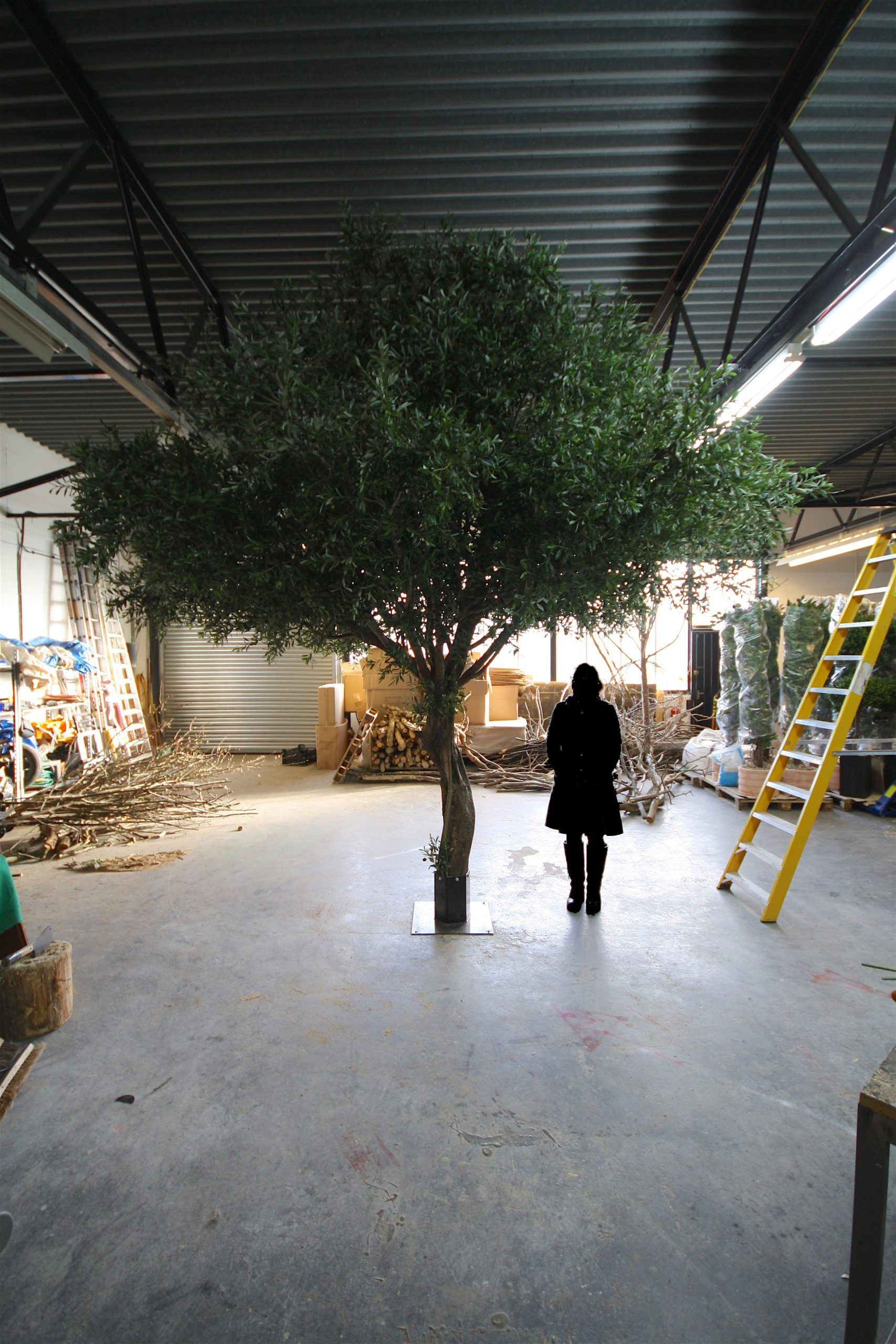 Large Fake Mediterranean Olive Tree For Restaurant In Greece Fakeolivetree Oli Fake Fakeolivetree Greece Larg In 2020 Fake Indoor Trees Indoor Trees Fake Trees