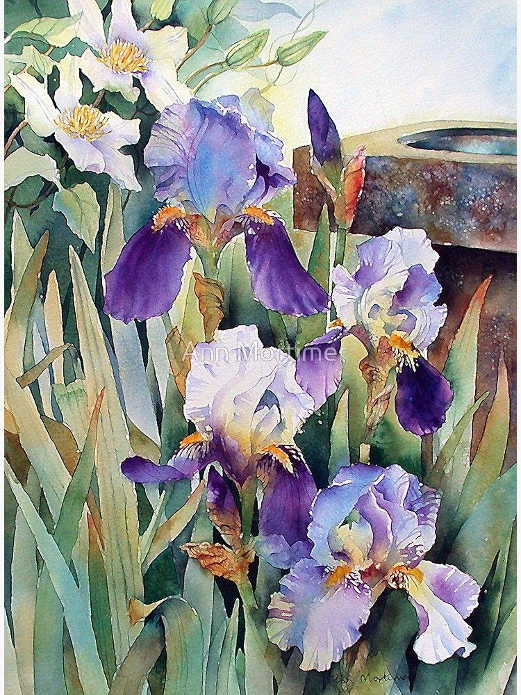 Irises And Clematis Greeting Card By Ann Mortimer Flowers In