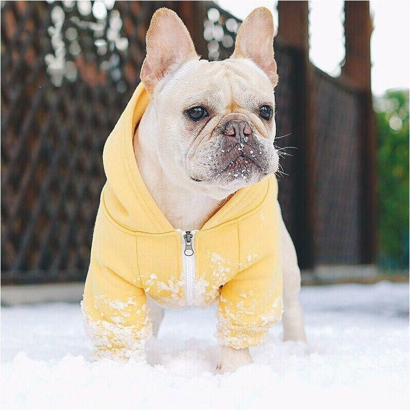 Hoodie For French Bulldogs Chihuahuas And Pugs Panda Dog