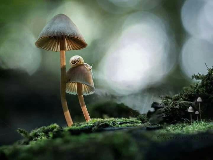 Mystical mushrooms <3