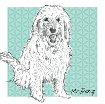 Pet Portrait by Letterfest.com