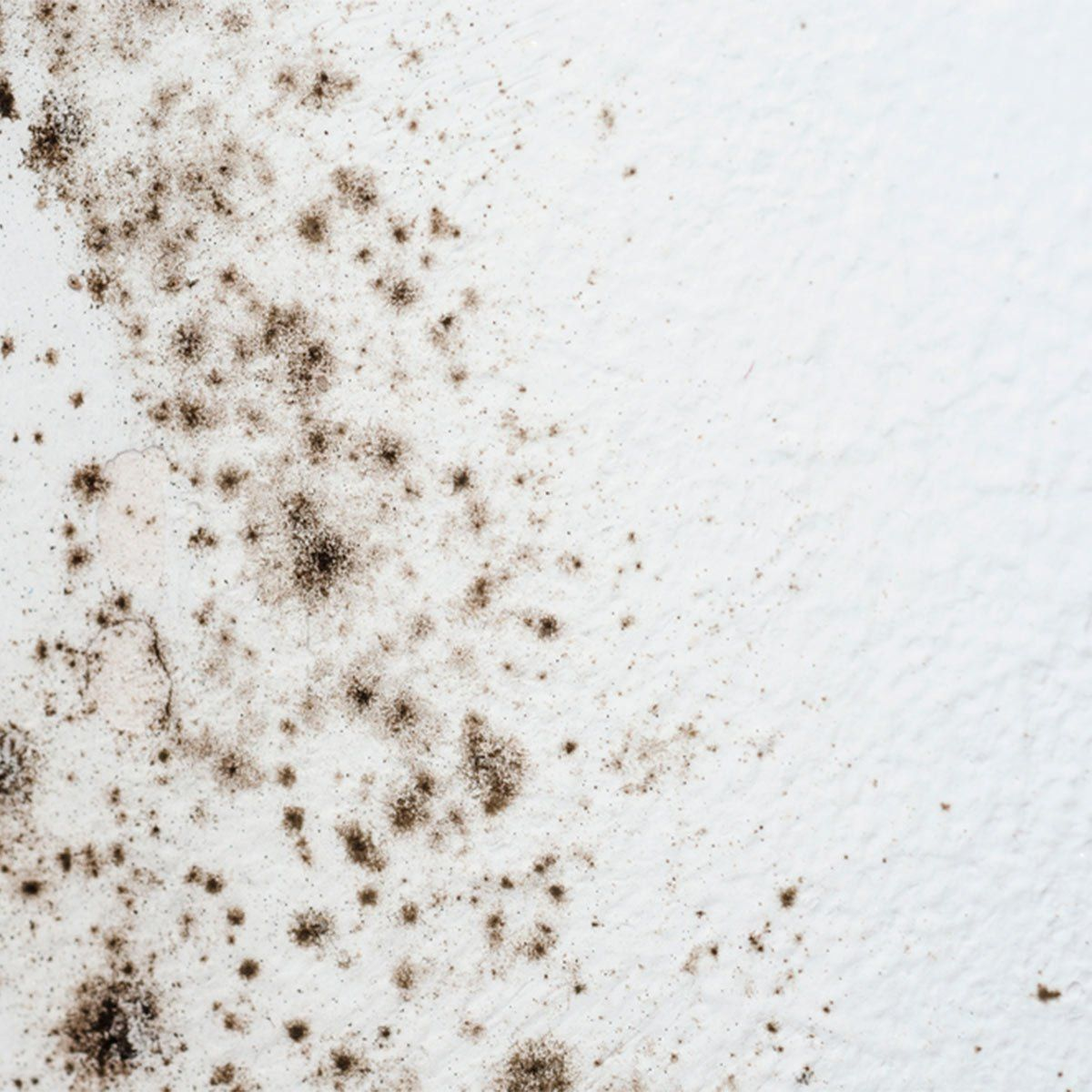 How To Get Rid Of Mold On Walls In The Bathroom Mold On Bathroom Ceiling Mold Remover Mold In Bathroom