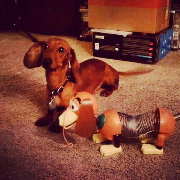 Pin By Jean On Dachshund Lover For 65 Yrs Weenie Dogs