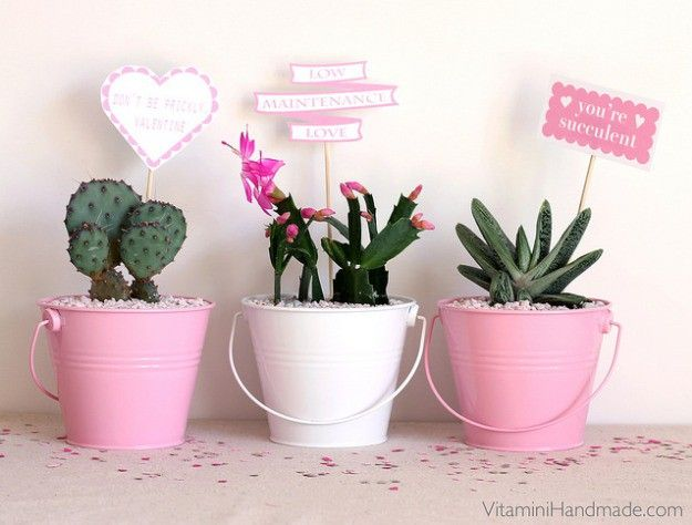 Succulent Planter | 10 Valentine's Day Ideas for Him