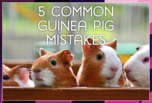 Pin On Pet Tips