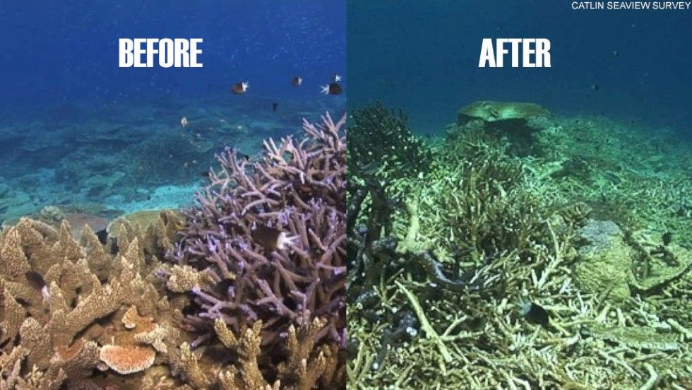 Australia given another year to act on Great Barrier Reef ...