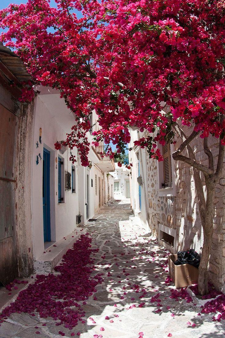 Komm mit uns in die Provence! Dohlenreise - Blumen Natur Ideen - #blumen #dohlenreise #ideen #natur #provence -  Komm mit uns in die Provence! Dohlenreise – Blumen Natur Ideen   Reisen Komm mit uns in die Provence! Dohle Reise / #blumennatur #das #Dohlenreise #Komm #Mit