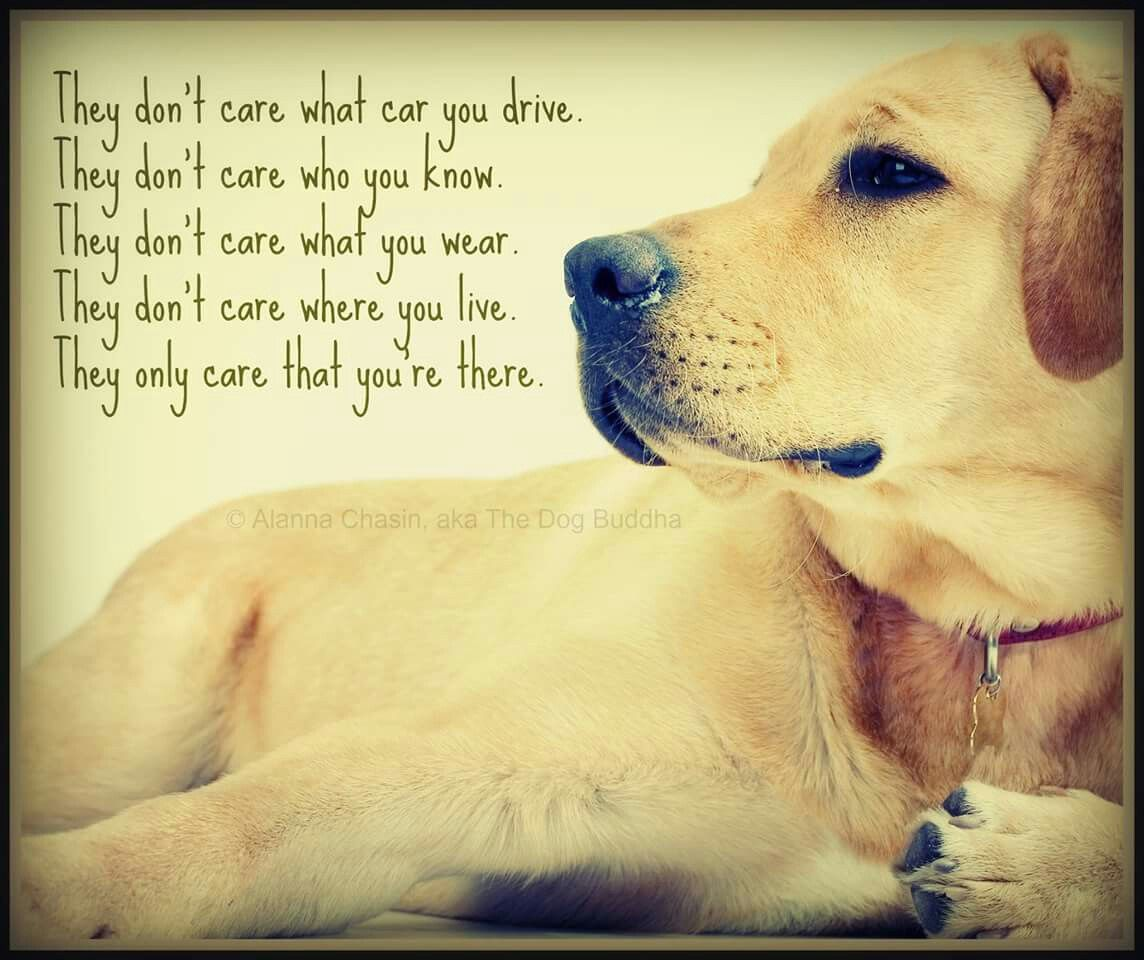 Daily Quotes, I Love Dogs, Dog Quotes, Dog Lovers, Read More, Friends,  Pets, Live