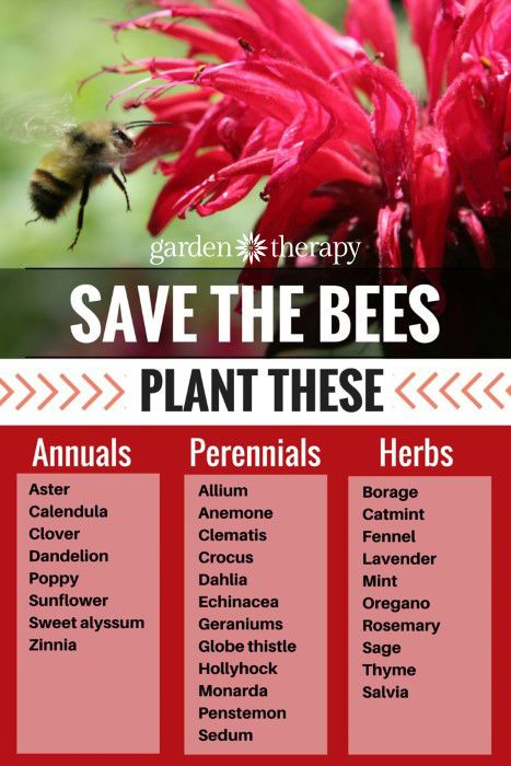 Create a bee friendly garden garten bienenfreundliche for Raum pflanzen