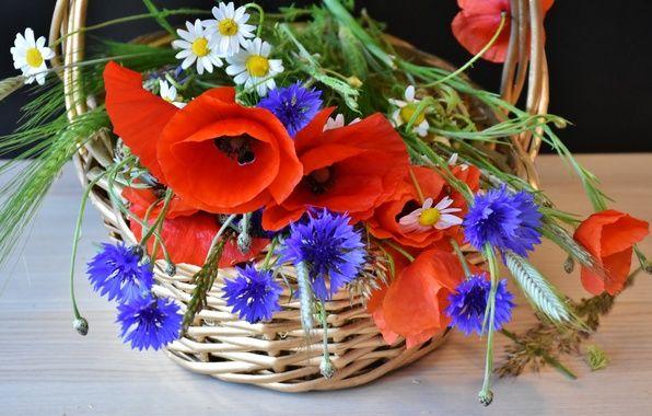 Картинки по запросу васильки цветы фото | Букет маков ...