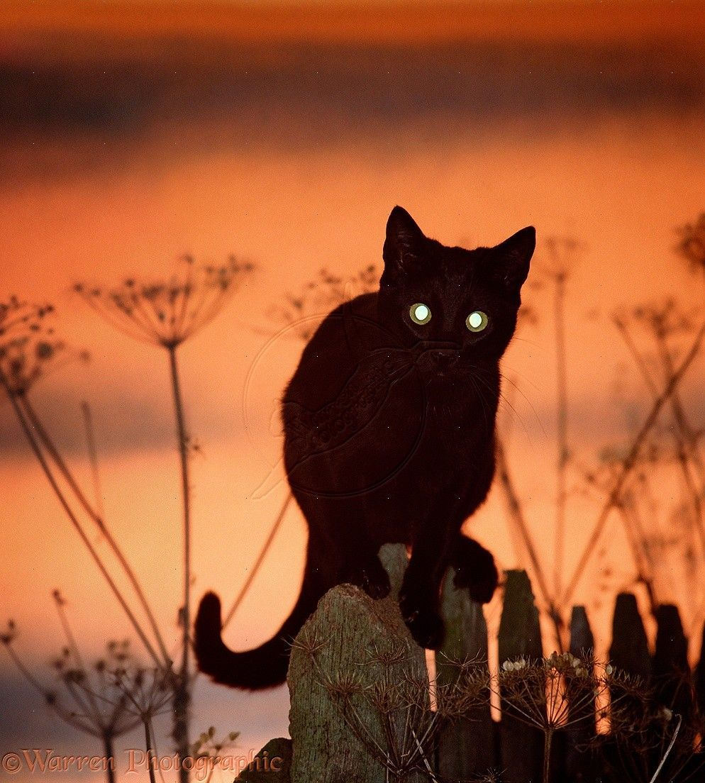 7 Reasons Why Cats Meow At Night and What To Do Black