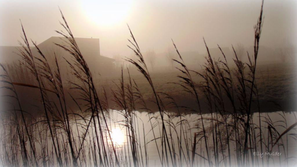 #fotografie #landschap #natuur #mist #zon #riet #water #Bolsward #Friesland