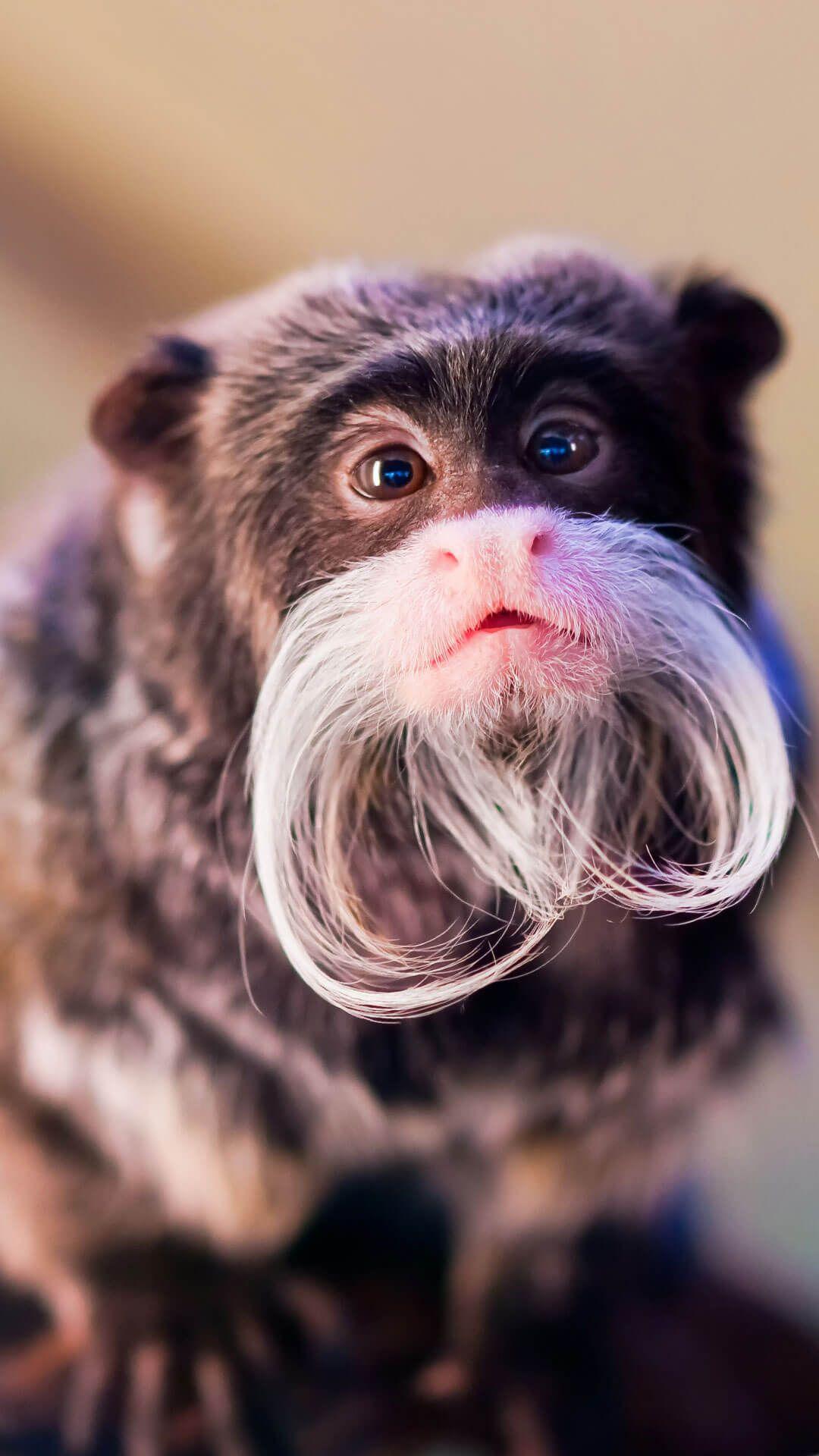 Cute Monkey Wallpaper For IPhone 6 HD