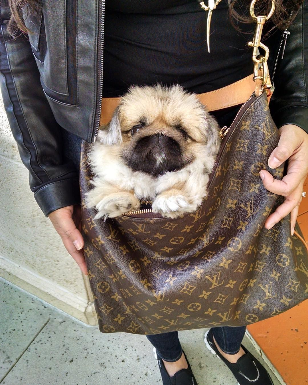 By Konabears Dogs Louis Vuitton Bag Neverfull Your Dog