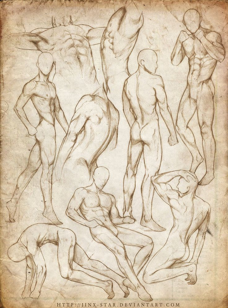 Anatomía masculina en diferentes poses. Male anatomy in different ...