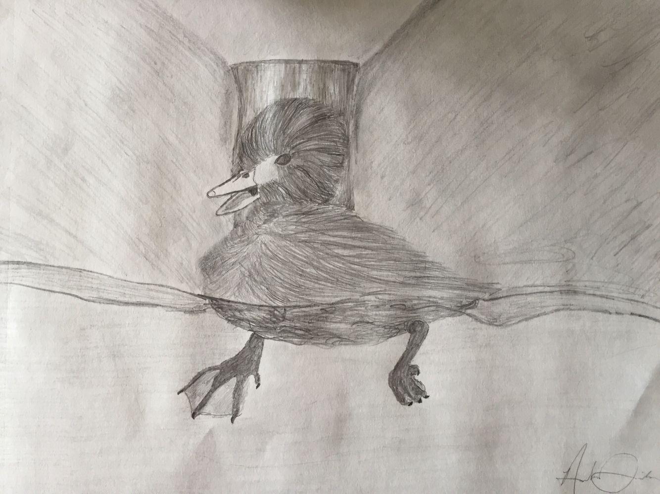 #duck #duckling