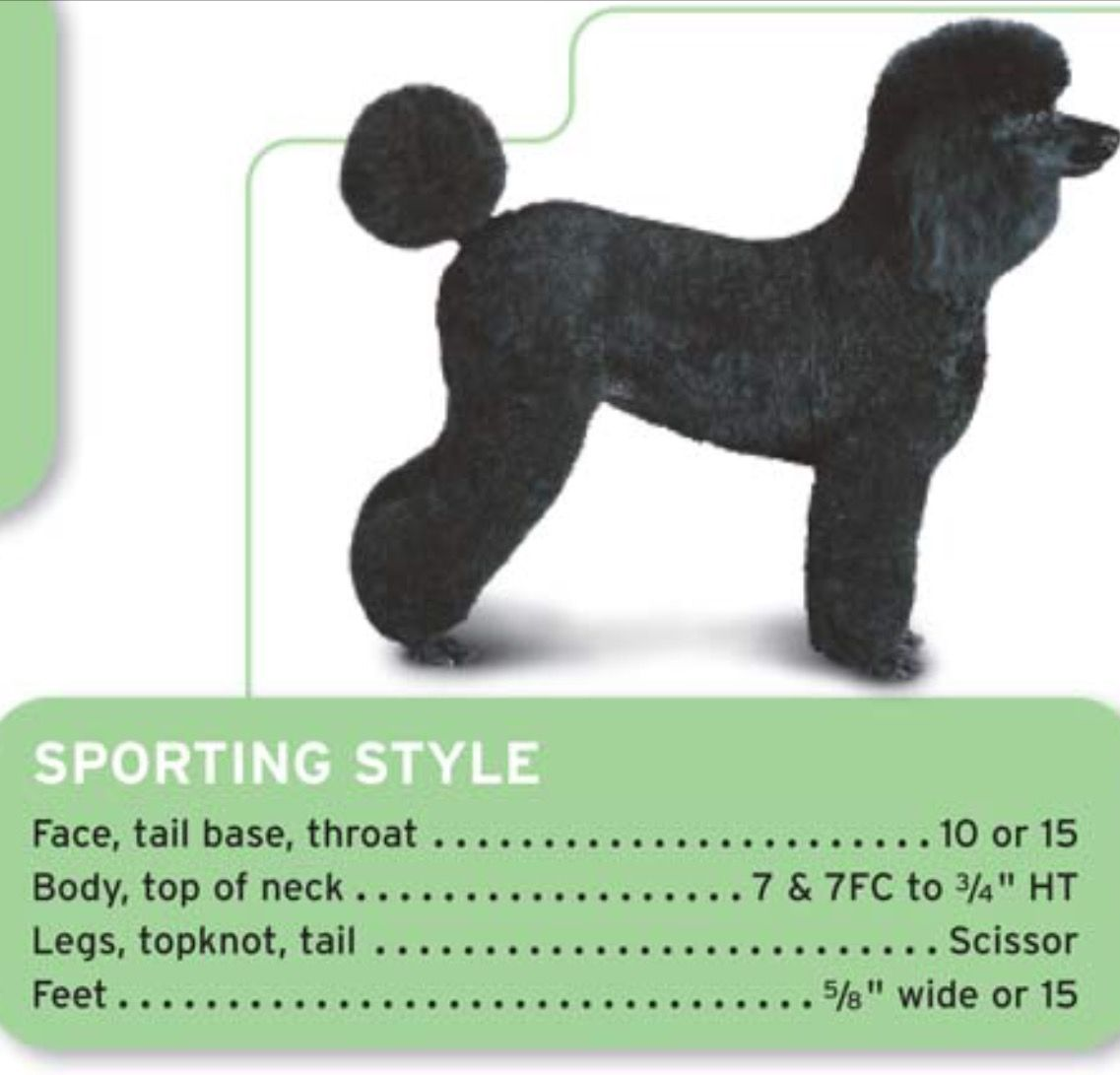 Standard Poodle Sporting Style Clip Grooming Standard Poodle Standard Poodle Haircuts Poodle Grooming