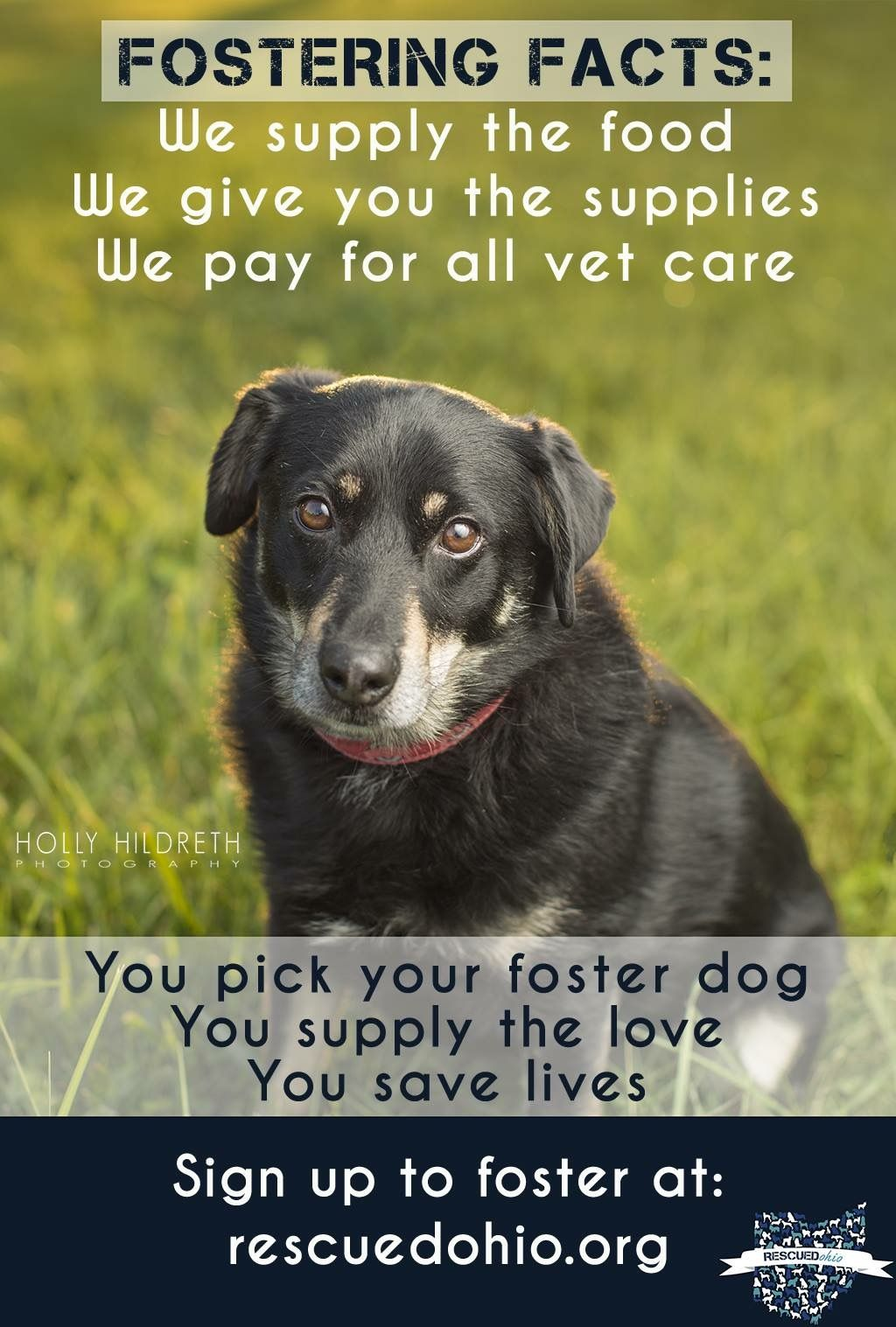 Fostering Saves Lives Sign Up At Rescuedohio Org To Start Fostering With Us Foster Dog Dogs The Fosters