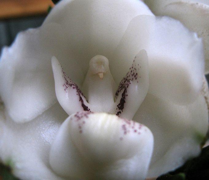 Najpiekniejsze Kwiaty Swiata Unusual Flowers Strange Flowers Beautiful Flowers