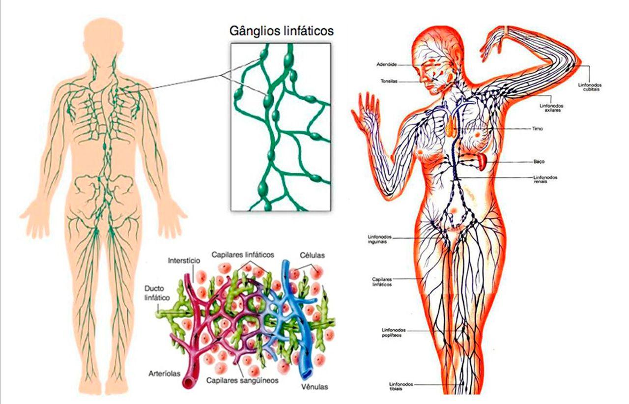 La linfa es el líquido que circula por el sistema linfático, formado ...