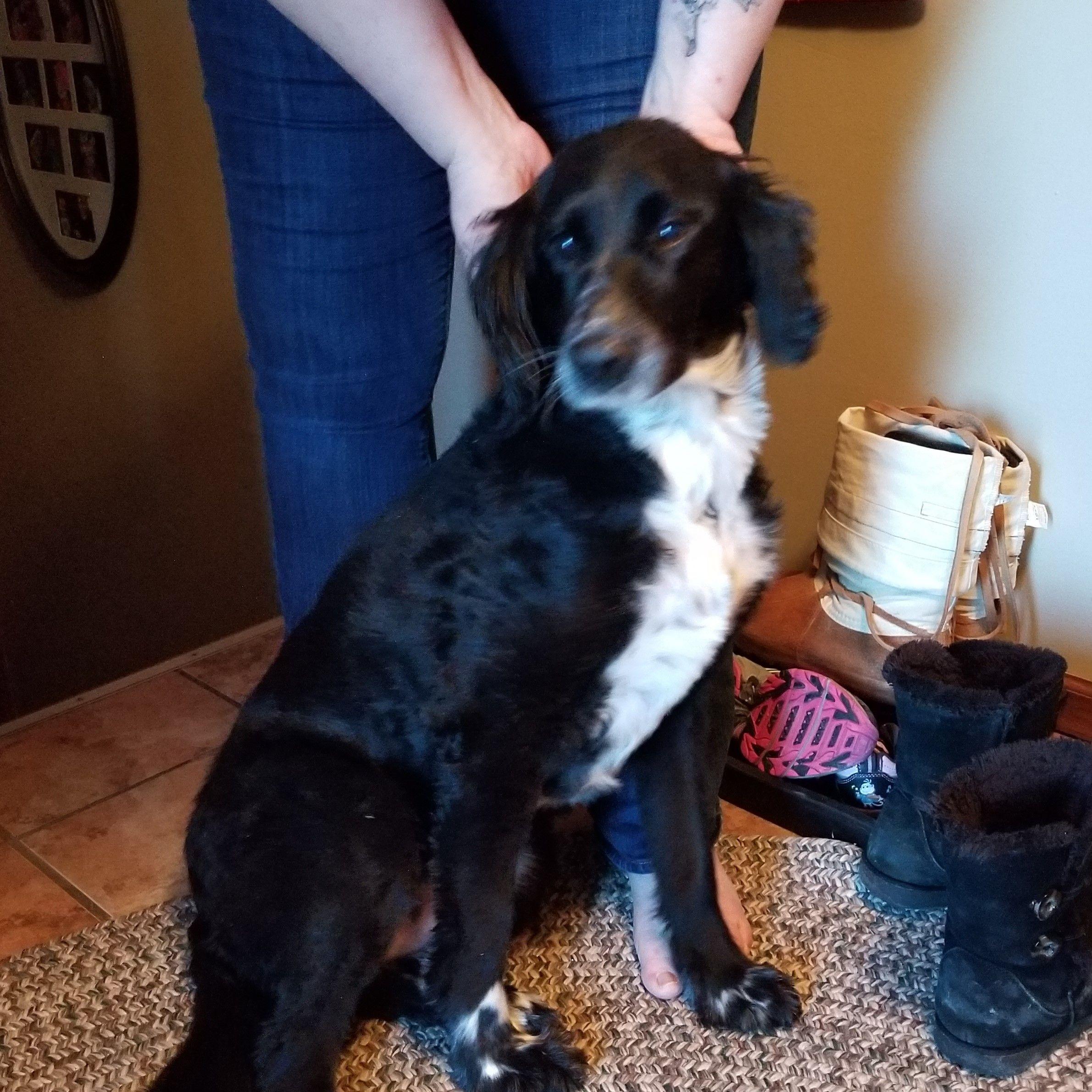 Adopt Holley on Petfinder Dog adoption, Dogs, Dog cat