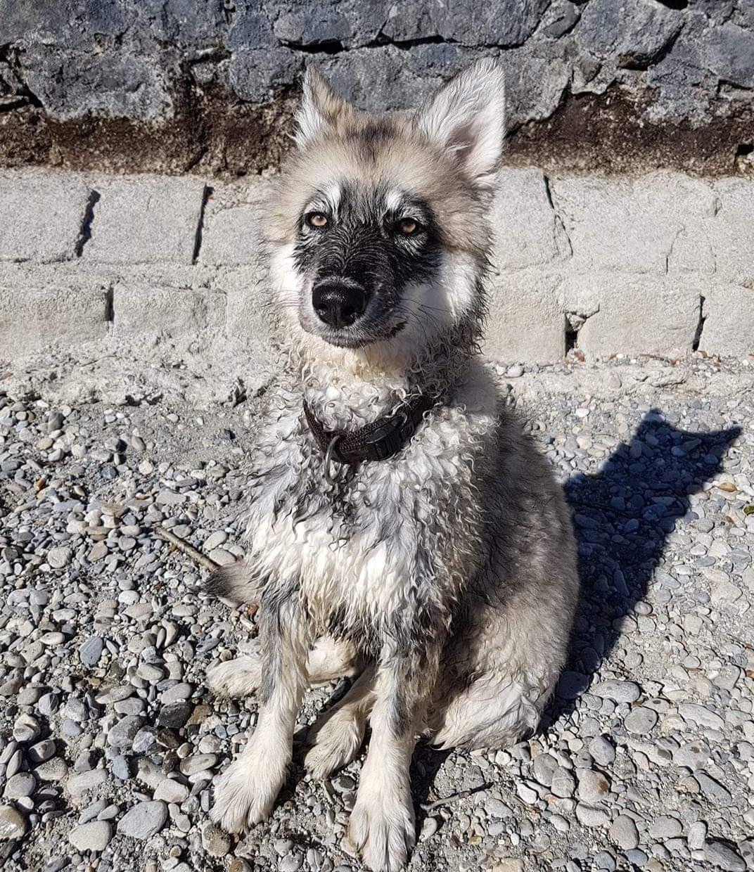 Sandros Leisha Dog Sandrosleishadog Sandrosleishadogs Dog Dogs