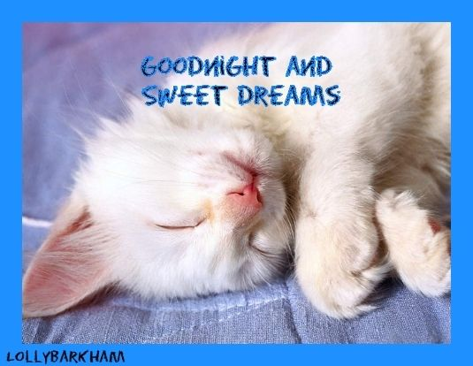Dreams Photo Sweet Dreams Kitten Cat Quotes Funny Good Night Friends Cute Animals