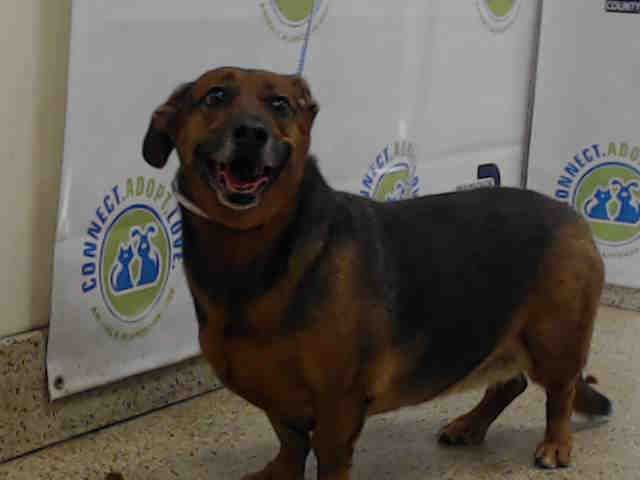 Petharbor Com Animal Shelter Adopt A Pet Dogs Cats Puppies Kittens Humane Society Spca Lost Found Animal Shelter Humane Society Kittens