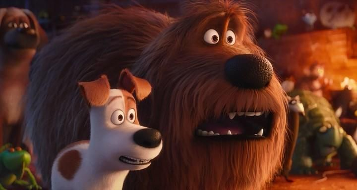 The Secret Life Of Pets Online Dublat In Romana