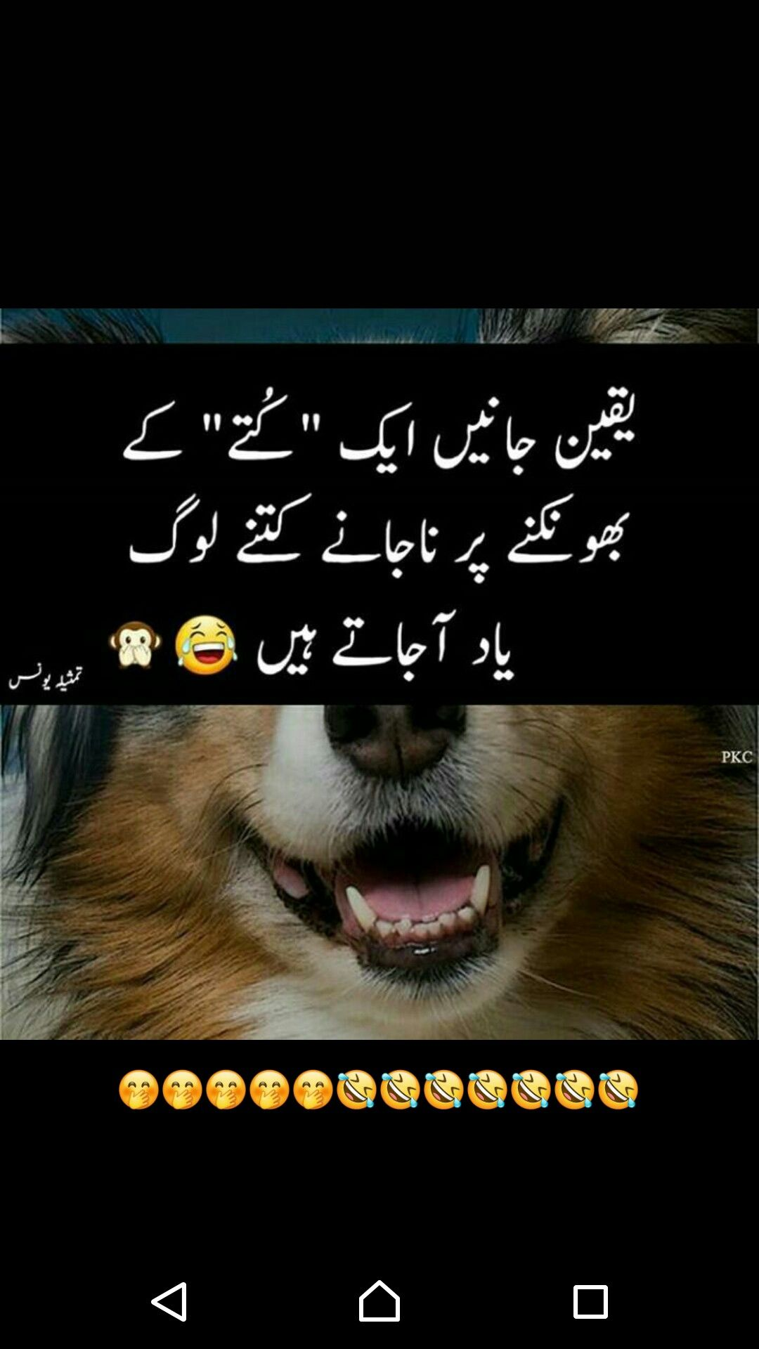 Pin By Sobia Khan On Fun Cute Funny Quotes Funny Quotes Urdu Thoughts