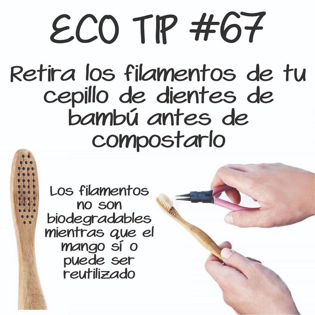 Retira Los Filamentos De Tu Cepillo De Dientes De Bambú Antes De Compostarlo Cepillos De Dientes Productos De Limpieza Ecologicos La Vida Verde
