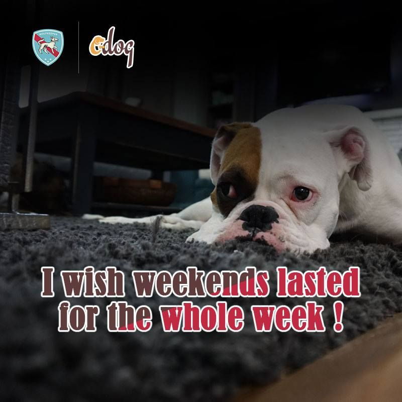 Mondays Are Ruff Can I Have The Weekend Back Please Doglovers