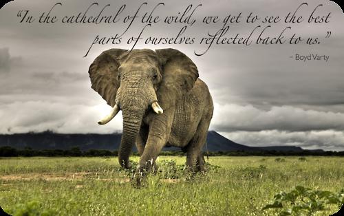 Purest Little Part of Me | African bush elephant, African animals, African  elephant
