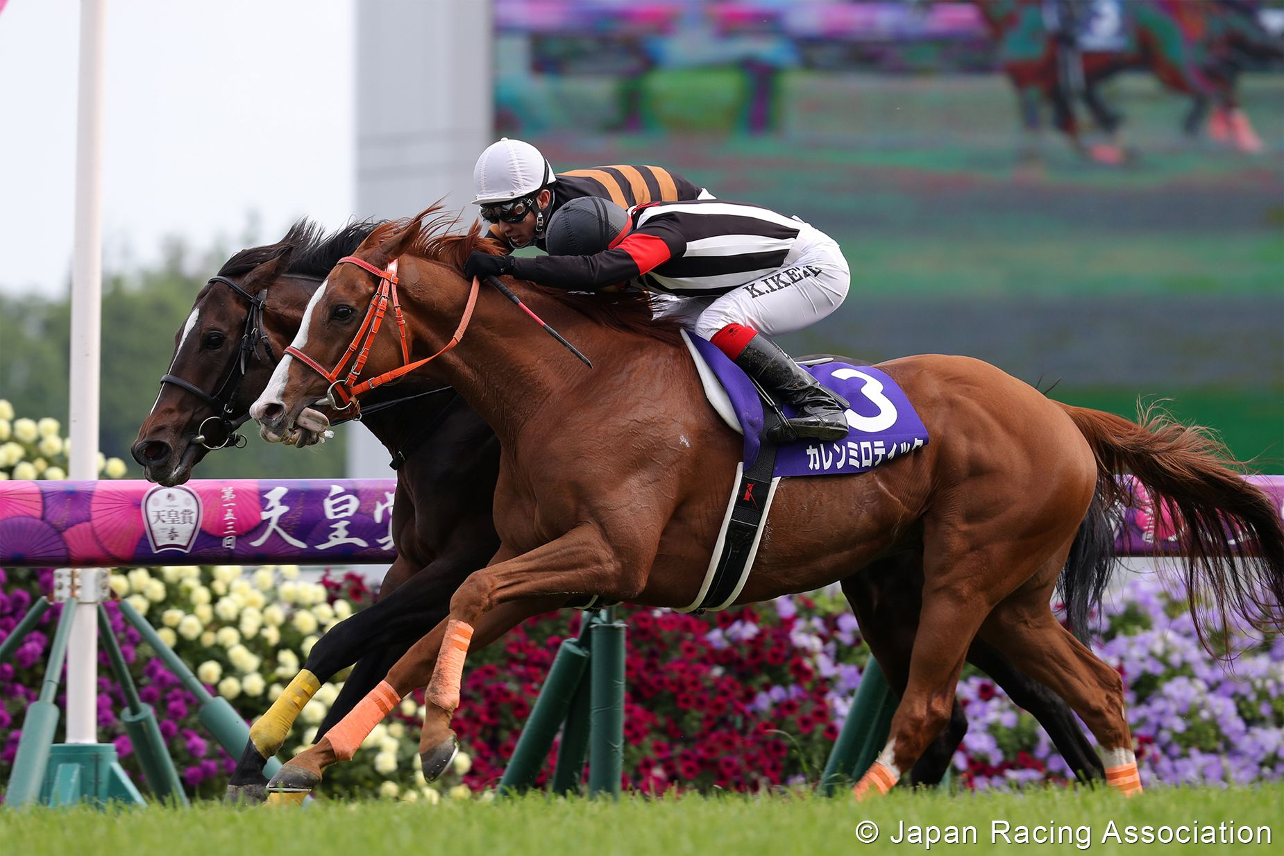 Tenno sho betting on sports double chance betting calculator oddschecker