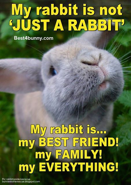 Pin by Allison Stanley on Quotes | Cute bunny pictures ...