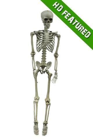 Skeleton Hanging 60in Halloween Decoration Halloween Props Scary