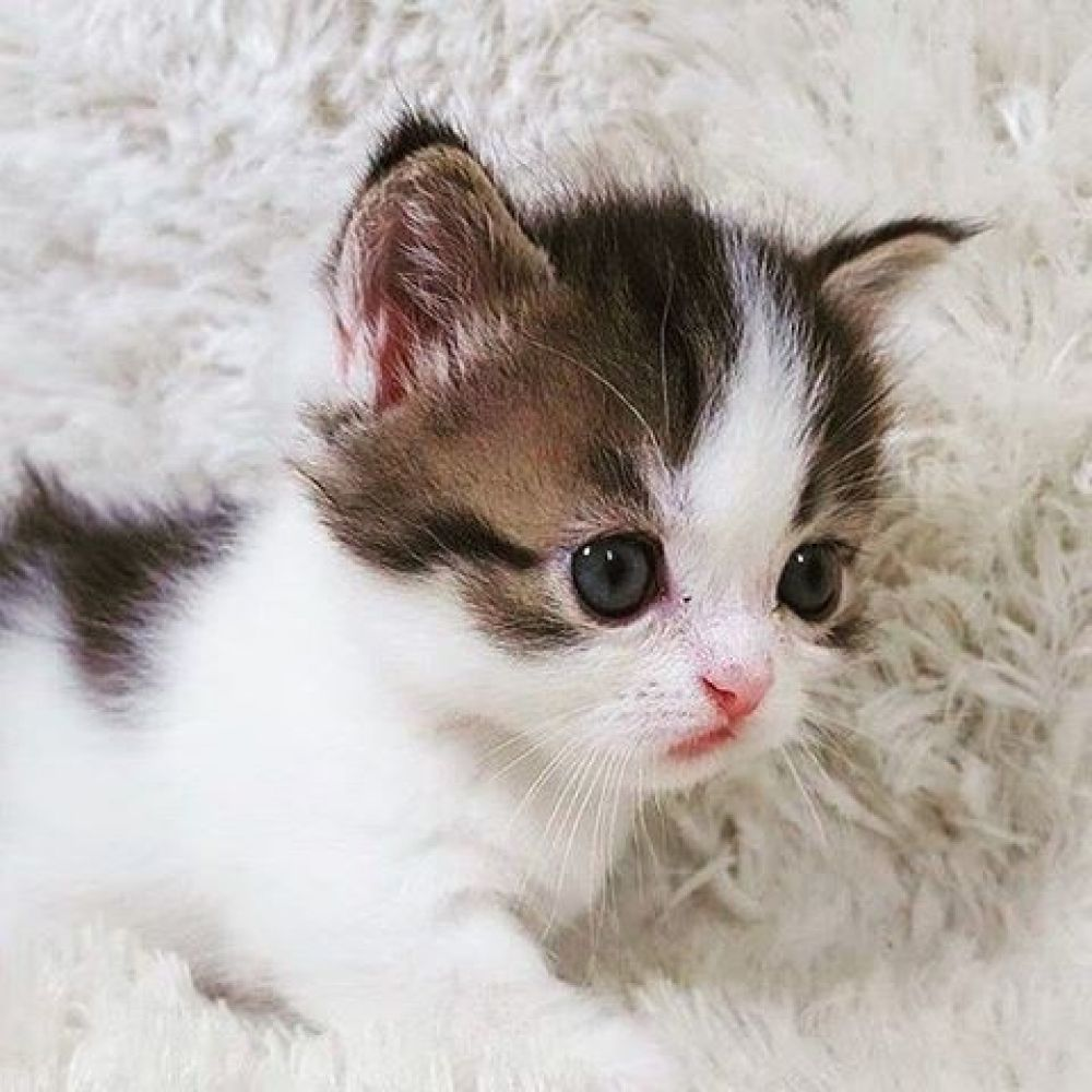 That S Just Superb Welcome To Sunspurllc Com Cat Cats Kitten Dog Puppy Pup C Kitty Kittens Animals And Pets Pets Kittens