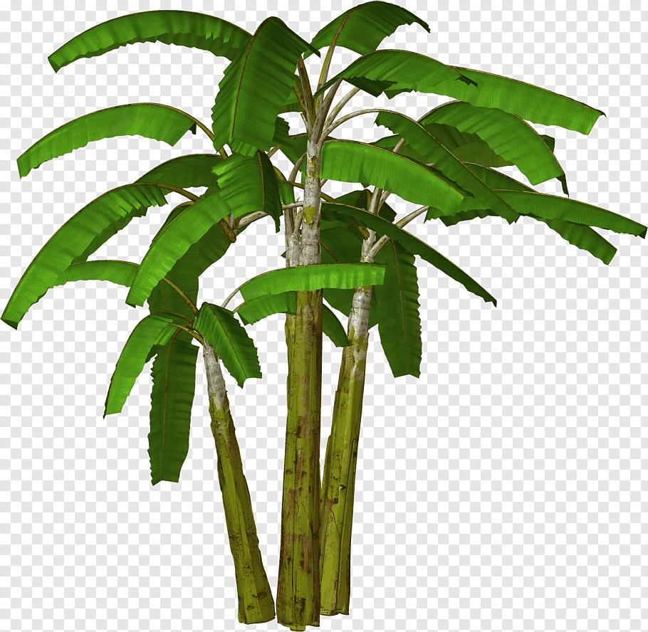 Banana Plant Banana Tree Banana Outline S Free Png Banana Plants Banana Tree Palm Tree Sticker