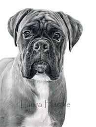 Boxer drawings buscar con google art paintings portraits pinterest colorier animal - Dessin chien boxer ...