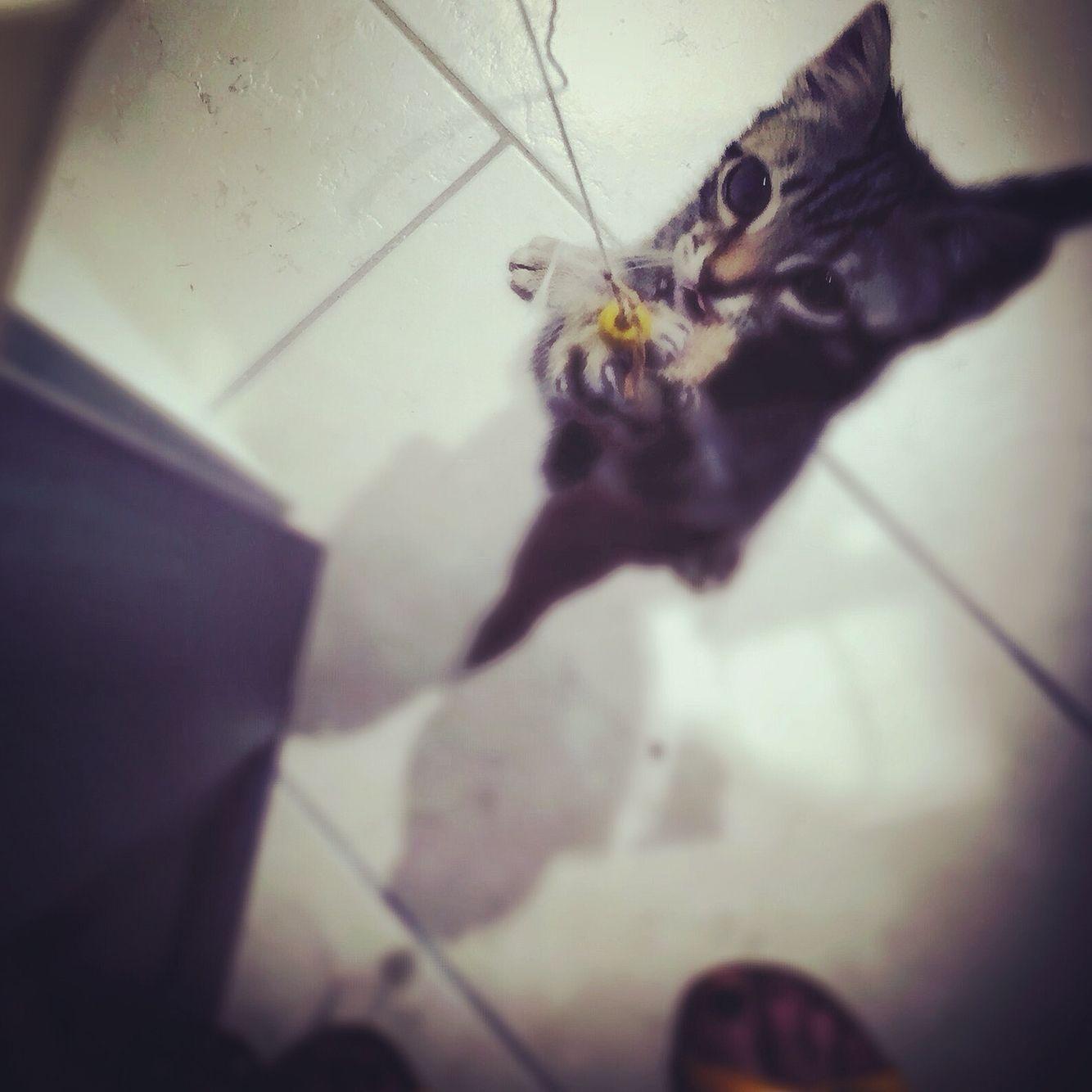 #Algo #kitten #love