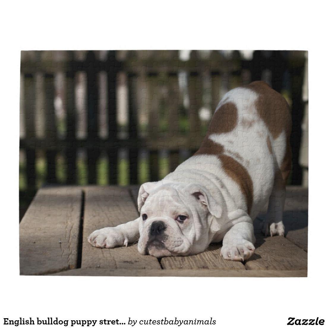 English Bulldog Puppy Jigsaw Puzzle Zazzle Com In 2020 Puppy Breeds Bulldog Bulldog Breeds