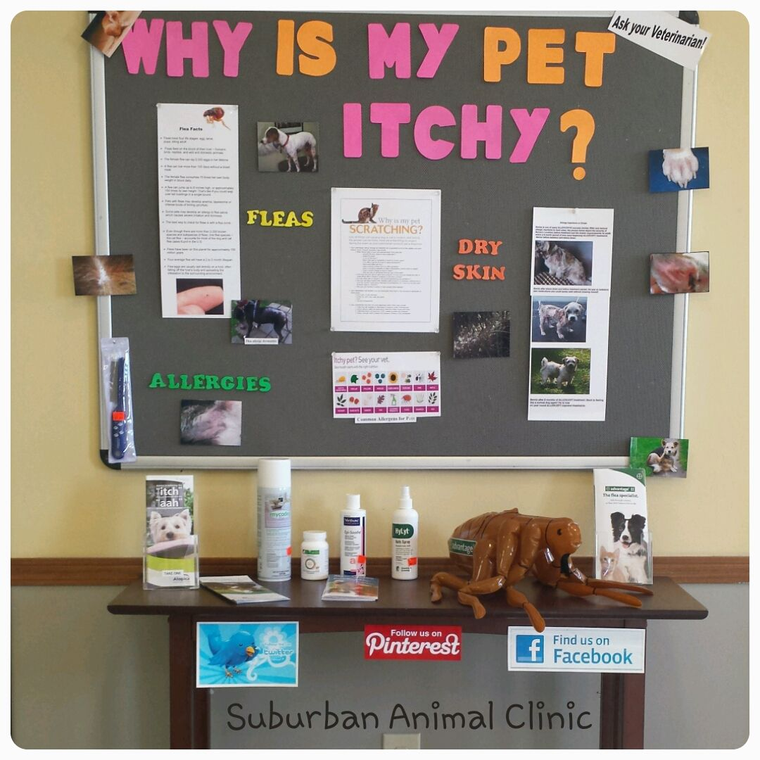 Suburban Animal Clinic S Bulletin Board For The Allergy Season Suburbananimalclinic Itchy Pets Animals Dryskin Pet Clinic Veterinary Clinic Vet Medicine