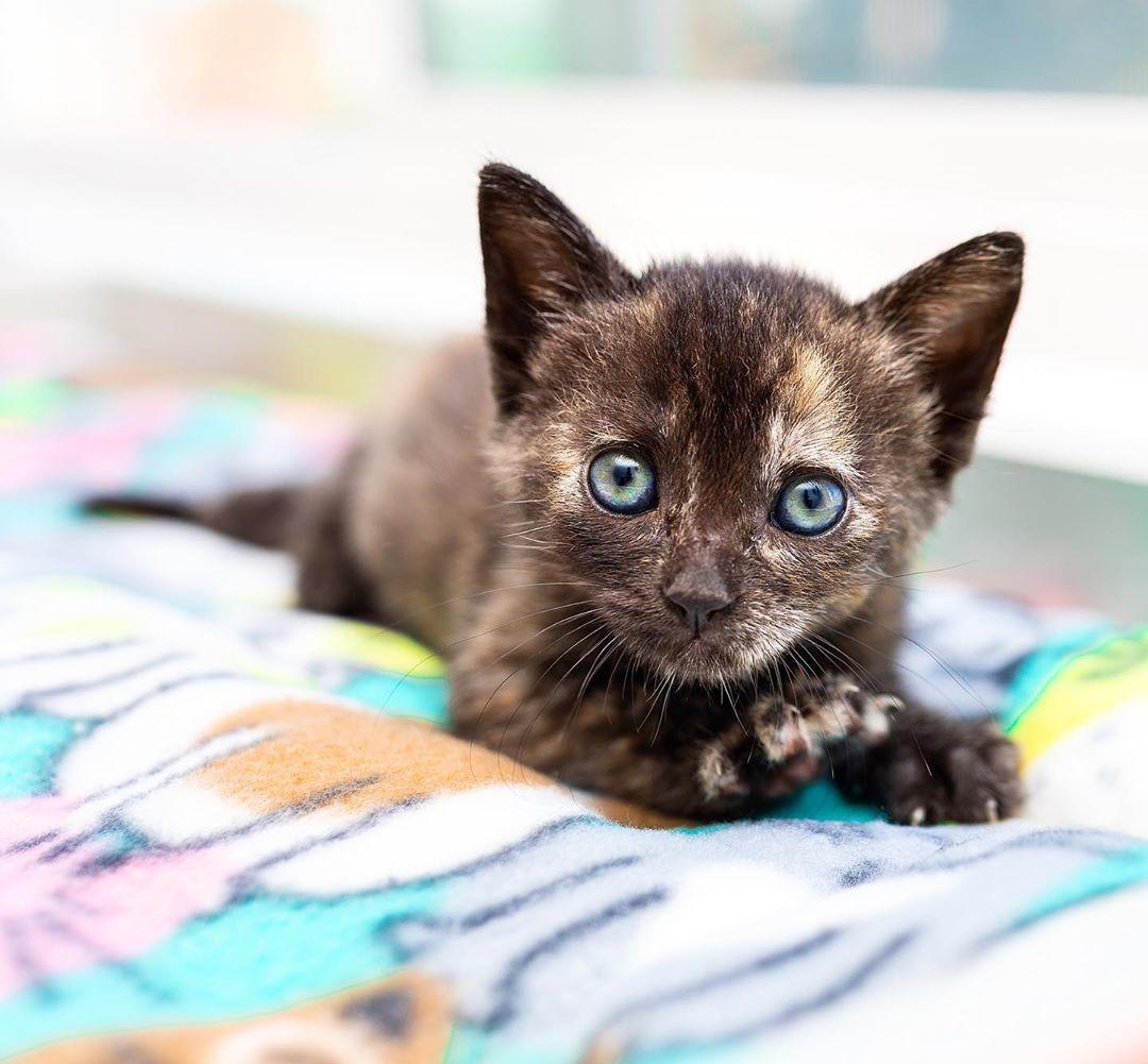 The Simple Guide Of Feeding Kittens Feeding Kittens Kittens Kittens Cutest