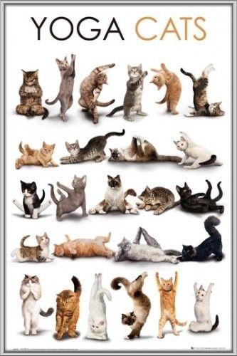 gatitoiss